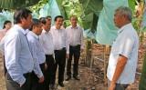 Đoàn cán bộ tỉnh Quảng Trị tham quan mô hình nông nghiệp hiệu quả cao tại Long An