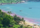 Xác định nguyên nhân xuất hiện vệt nước đỏ ven biển Đà Nẵng