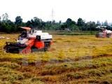 Nông dân Việt Nam sản xuất lúa gạo bền vững theo chuẩn quốc tế