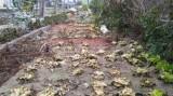 Mua thuốc diệt cỏ hại hàng xóm vì mâu thuẫn nhỏ