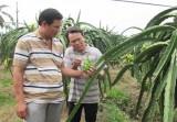 """Kinh tế tập thể - """"Con đường"""" giúp nông dân phát  triển kinh tế, tăng thu nhập"""
