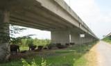 Hành lang an toàn đường cao tốc -  Vẫn còn những bất cập