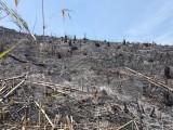 Công an vào cuộc điều tra vụ phá rừng quy mô lớn ở tỉnh Đắk Nông