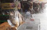 Nhức nhối chợ nông sản Thạnh Hóa