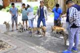 Mang chó Phú Quốc về Long An
