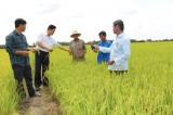 """Ứng dụng công nghệ cao """"Chìa khóa"""" tăng năng suất, chất lượng, hiệu quả trồng lúa"""