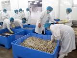 Sản phẩm ngao sạch của Nam Định lần đầu xuất khẩu sang châu Âu