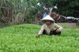 Tăng thu nhập nhờ tận dụng đất vườn