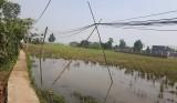 Bến Lức: Nỗi lo mất an toàn lưới điện nông thôn mùa mưa bão