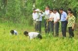 Phó Chủ tịch UBND tỉnh – Phạm Văn Cảnh khảo sát sâu, bệnh trên lúa tại huyện Tân Thạnh