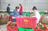 Bài cuối: Giải pháp để liên kết tiêu thụ nông sản hiệu quả