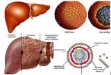 Tiêm ngừa góp phần loại trừ virus viêm gan B
