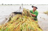 Theo dõi chặt chẽ diễn biến mưa, lũ để bảo vệ lúa, bảo vệ dân