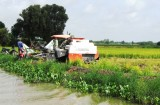 Tân Lập: Hơn 1.400ha lúa có khả năng bị ảnh hưởng bởi lũ