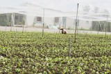 Nhiều khó khăn, vướng mắc trong phát triển nông nghiệp ứng dụng công nghệ cao