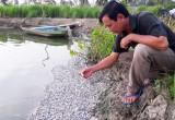 Tân Thạnh: Cá chết bất thường, nông dân thiệt hại hơn 250 triệu đồng