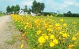 Những con đường hoa ở Long Sơn
