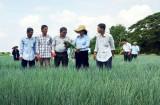 Đào tạo nghề cho lao động nông thôn sát nhu cầu ngành, nghề, lao động ở địa phương