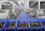 EU trở thành thị trường nhập khẩu tôm lớn nhất của Việt Nam