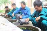 Phòng, chống bệnh sốt xuất huyết và bảo vệ môi trường