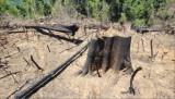 Thủ tướng yêu cầu xử lý nghiêm các vụ phá rừng tại Quảng Nam