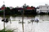Hội Chữ thập Đỏ kêu gọi giúp đỡ người dân bị thiệt hại vì bão số 12