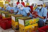 Ký EVFTA, nông sản Việt Nam cần kiểm soát chặt chẽ về chất lượng