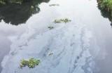 Ô nhiễm môi trường khu vực kênh An Hạ: Cần xử lý nghiêm