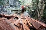 Việt Nam mất 1,7 triệu hécta rừng phòng hộ trong vòng 10 năm qua