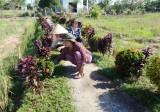 Hội Liên hiệp Phụ nữ huyện Cần Giuộc chung tay xây dựng nông thôn mới