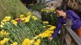 Quảng Bình: Hình ảnh cảm động ở khu mộ Đại tướng mùng 1 Tết