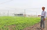 Tháo gỡ khó khăn trong phát triển nông nghiệp ứng dụng công nghệ cao