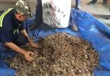 Kiểm tra lô hàng hạt điều, phát hiện 3 tấn vảy tê tê