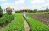 Phước Hậu hướng đến xây dựng xã nông thôn mới kiểu mẫu