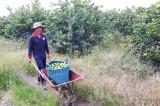 Bến Lức: Trên 32.800 lượt hội viên nông dân sản xuất kinh doanh giỏi