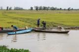 Hàng trăm ha lúa Hè thu bị ngập nước