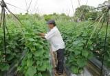 Phát triển sản phẩm nông nghiệp gắn với xây dựng nhãn hiệu và thương hiệu