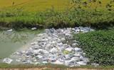 Tân Hưng: Người dân đổ cá chết làm ô nhiễm môi trường
