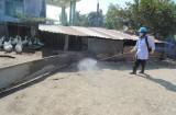 Chủ động phòng, chống dịch bệnh trong chăn nuôi