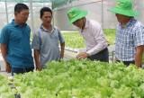 Liên kết sản xuất, bảo đảm đầu ra cho nông sản