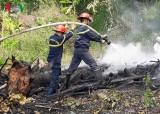 Dân đốt rác bất cẩn làm cháy lan sang rừng Sơn Trà