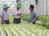 Hiệu quả từ sản xuất rau công nghệ cao