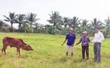 Quỹ Thiện Tâm - Tập đoàn Vingroup trao bò giống cho hộ nghèo tại Long An