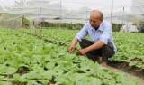 """Phát triển hợp tác xã nông nghiệp ứng dụng công nghệ cao: Cần có """"lực đẩy"""""""