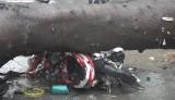 TP.HCM ngập diện rộng, cây ngã đè chết người đi đường