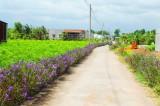 Long Cang: Đường về đích nông thôn mới không còn xa