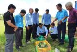 Hỗ trợ thanh niên Svay Rieng phát triển kinh tế