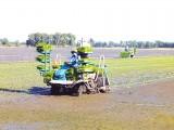 Hiệu quả từ phát triển nông nghiệp ứng dụng công nghệ cao