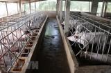 Liên kết chuỗi gắn với chế biến - Xu thế tất yếu của ngành chăn nuôi