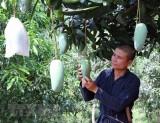 'Giấy thông hành' và câu chuyện xuất khẩu trái cây Việt Nam